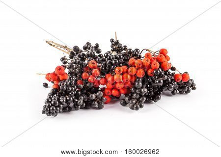 Ripe red and black rowan isolated on white background.