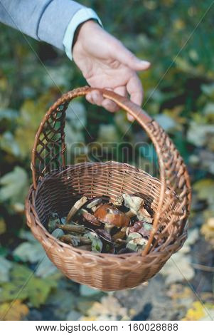 Human Hand Holding Basket With Eatable Mushrooms