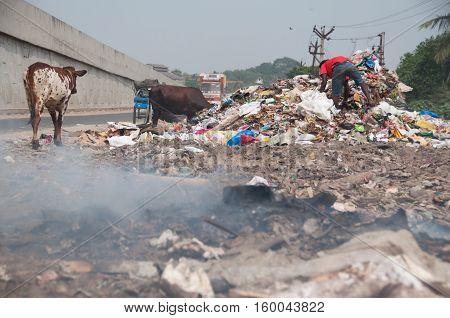 Asian trash disaster an illegal landfill burning