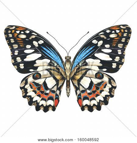 Sky butterfly in a wildlife by watercolor style isolated. Wild freedom, butterfly with a flying wings. Aquarelle butterfly for background, texture, pattern, frame, border or tattoo.