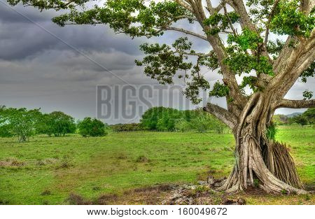 Beautiful old tree with a background of blue sky and vivid green grass and trees