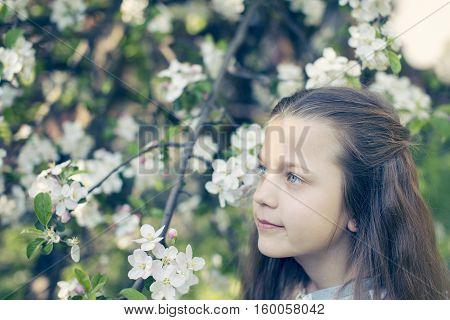 child girl close to blossom apple tree by springtime