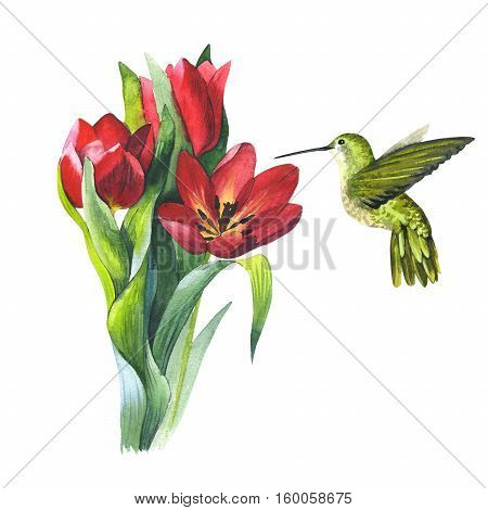 Wildflower tulip flower and colibri bird in a watercolor style isolated. Aquarelle wild flower and bird for background, texture, wrapper pattern, frame or border.