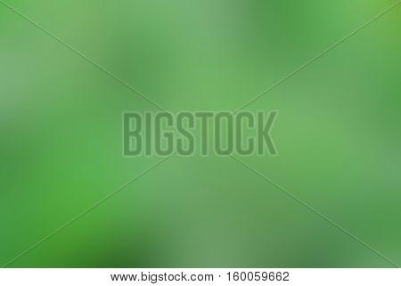 Green White Abstract Background Blur Gradient Design Graphic