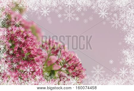 Sedum flowers bouquet on gray background and snoflakes frame