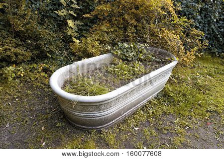 antique marble bathtub overrun by plants in the garden