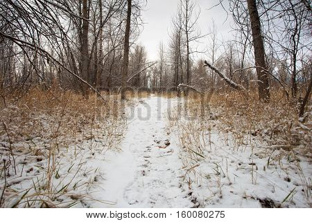 Snow covered hiking trail going through the forest.
