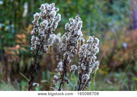Forest flowers with white inflorescences, focus on foreground