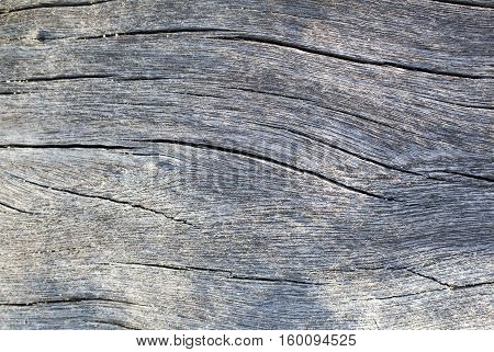 Wood texture in sunlight photo. Gray timber board with weathered crack lines. Natural background for shabby chic design. Grey wooden floor image. Aged tree surface close-up backdrop template