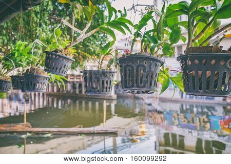 Outdoor flower pots with tropical succulent plants on the waterfront canal. Streets of Bangkok with flowers Thailand.