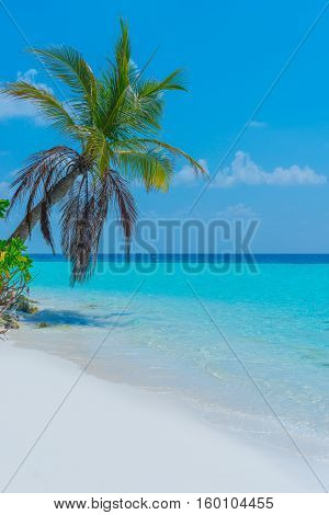 Panorama of a tropical island with turquoise lagoon white sand beach and palm tree. Bright blue sky with clouds low over the ocean.