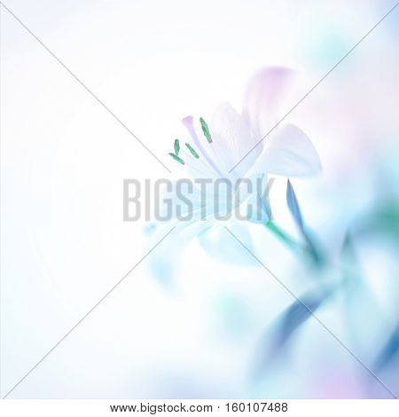 Closeup photo of a beautiful gentle white lily flower, nice floral background with copy space, elegant invitation for a wedding day