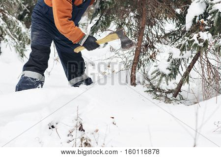 man with hatchet in the hands of cuts Christmas tree in the winter forest.