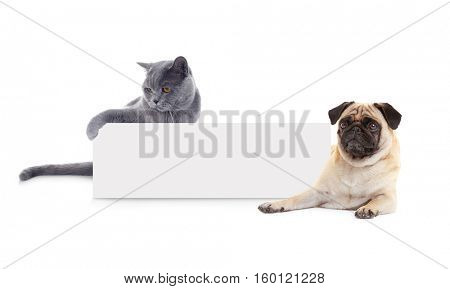 Cute cat and dog with blank card on white background