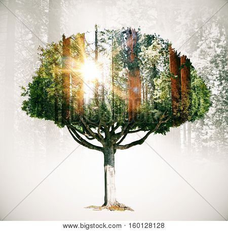 Abstract tree silhouette on forest background. Double exposure. Eco concept