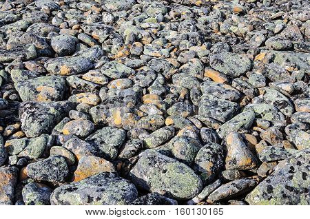 Gray pebbles covered with lichen in tundra