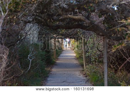 Rodanthe NC November 27 2016: Visitors walk through a tunnel of Live Oaks to see thousands of migrating waterfowl on the North Pond Wildlife Trail at Pea Island National Wildlife Refuge.