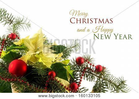 Potted poinsettia (Euphorbia pulcherrima) with white bracts decorated with fir branches and red baubles as a corner background against white sample text Merry Christmas and a Happy New Year