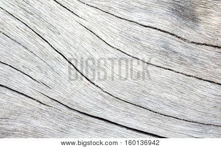Wood texture closeup photo. White timber board with weathered crack lines. Natural background for shabby chic design. Grey wooden table image. Old tree trunk without bark. Sea wood pale backdrop