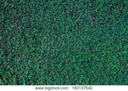 Background Green Texture, Nature Leaf Tree