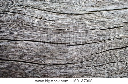 Wood texture closeup photo. White timber board with weathered crack lines. Natural background for shabby chic design. Grey timber table image. Silver tree trunk without bark. Sea wood monochrome image