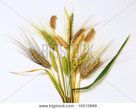 Antike Getreide