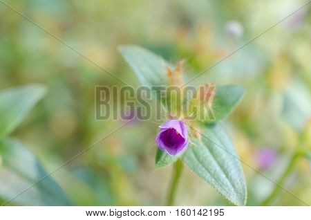 Purple wildflowers Born on stream in the forest beautiful detailed background blur.