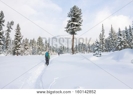 Girl Backpacker Walking On A Forest Road In The Winter Forest In The Mountains