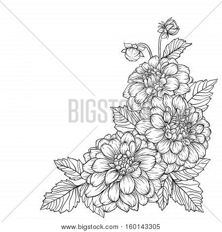 beautiful monochrome black and white bouquet dahlia isolated on background. Hand-drawn. design greeting card and invitation of the wedding birthday Valentine's Day mother's day and other holiday