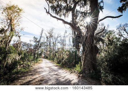 The Live Oak tree lined path near Savannah, Georgia on a warm sunny morning.