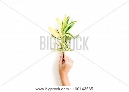 exotic tropical bouquet in girl's hands on white background. flat lay top view concept