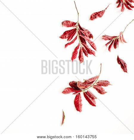 red leaves on white background. flat lay.