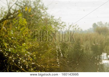 Spider fiber in the field of thailand.