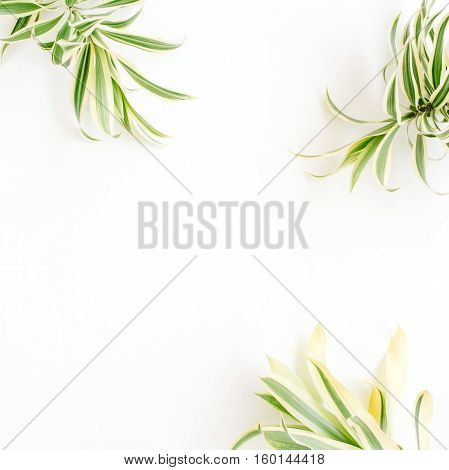 exotic green leaves frame on white background. flat lay.