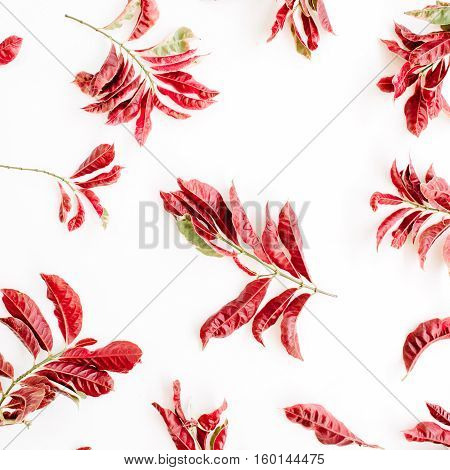red branches pattern on white background. flat lay.