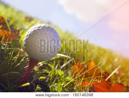 Golf ball in grass, close up at autumn