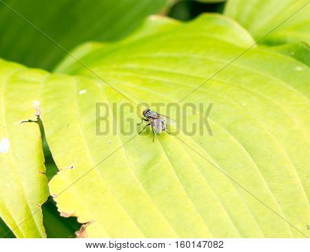 The fly on a leaf.