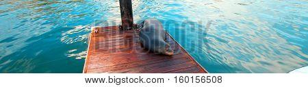California Sea Lion on marina boat dock in Cabo San Lucas Mexico BCS