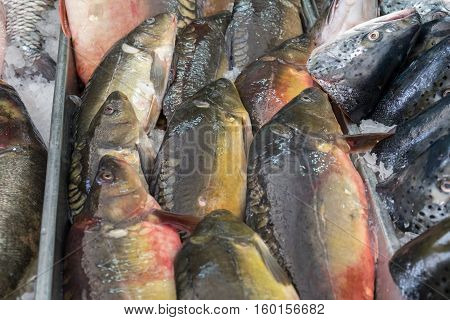 Fresh Cyprinus Or  Typical Carps On Ice At The City Market