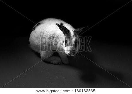 rabbit bunny animal abuse dark tone concep
