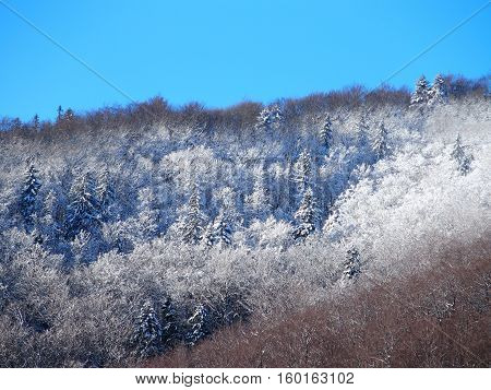 Snow covered woodland in Beskid Mountains near city of BIELSKO-BIALA in POLAND with clear blue sky in cold and sunny winter day, EUROPE on DECEMBER.