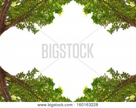 Frame with trees on all four corners on a white background.