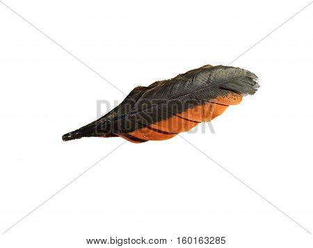 Chicken feathers on on a white background.