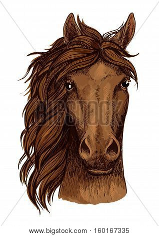 Horse head of brown arabian racehorse isolated sketch. Purebred stallion horse head icon for horse racing badge, equestrian sporting competition sign, riding club badge design