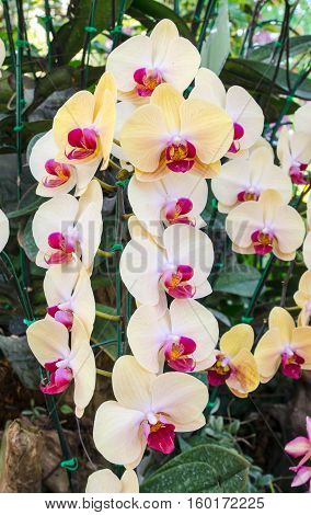 Beautiful orchid flowers in the natural garden