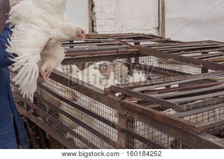 factory for the production of food products from chicken. cycle production process