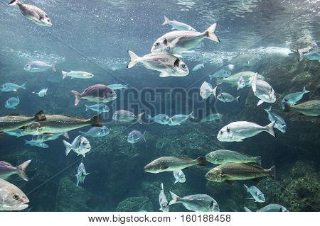 Fish fish swimming along in a tank