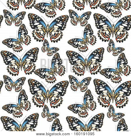 Sky butterfly in a wildlife pattern  by watercolor style isolated. Wild freedom, butterfly with a flying wings. Aquarelle butterfly for background, texture, pattern, frame, border or tattoo.
