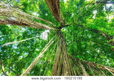 Green Trees In Tropical Rainforest