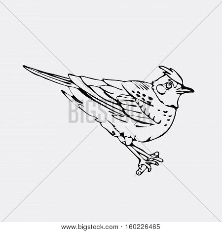 Hand-drawn pencil graphics, lark, oriole, chickadee, sparrow, blackbird, nightingale, finch, bunting, hangbird. Engraving, stencil style. Black and white logo, sign, emblem, symbol. Stamp, seal. Simple illustration. Sketch.